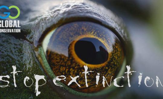 Stop Extinction - Video by PopDrop Design - W. J. McKay- Global Conservation